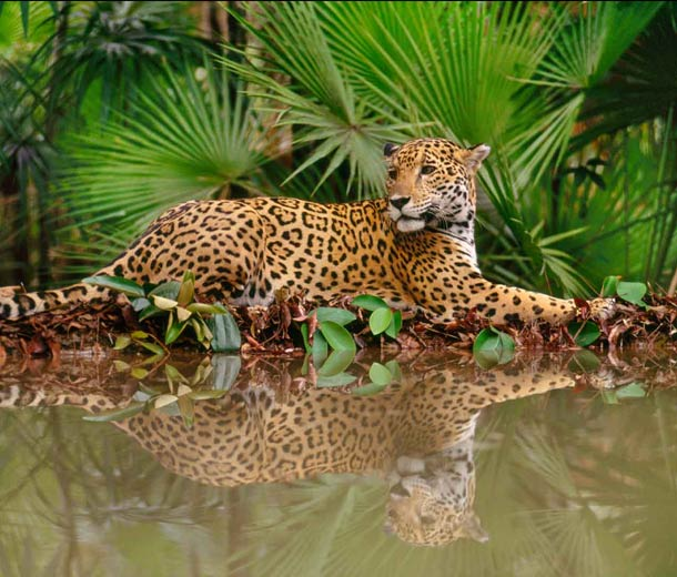Leopard unterstützt vom Salon Birgit Gmeiner