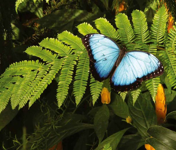 Schmetterling unterstützt vom Salon Birgit Gmeiner