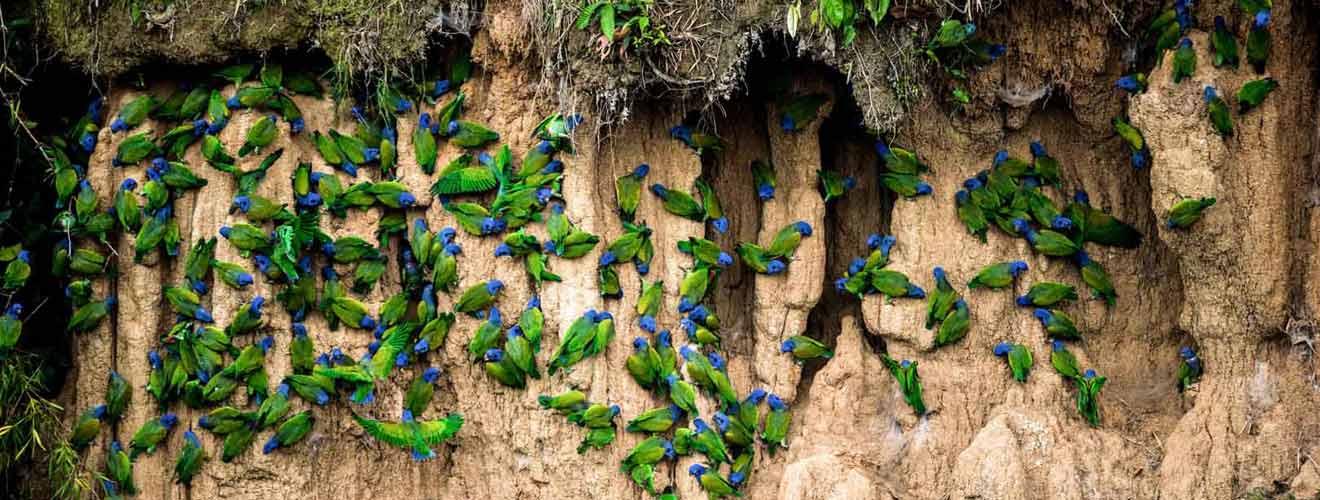 Vogelkolonie unterstützt vom Salon Birgit Gmeiner